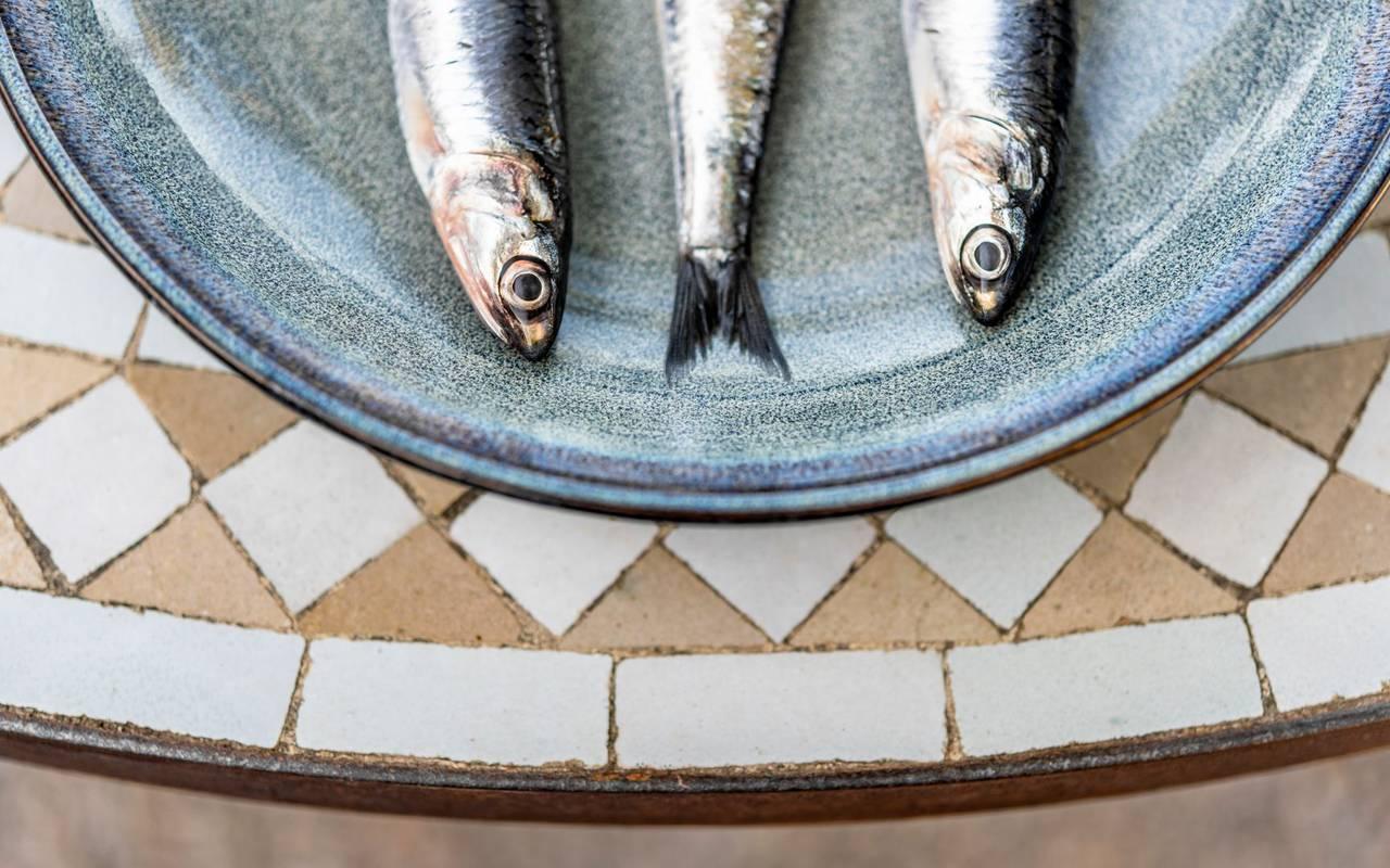 sardines dans une assiette - restaurant port vendres